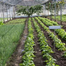 Lettuce Bay, The Glasshouses - Ballymaloe Cookery School