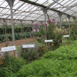 Herbs, The Glasshouses - Ballymaloe Cookery School